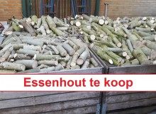 Essenhout_te_koop